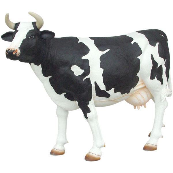 Cow with black spots - Head-Up (lookin' for the right guy)