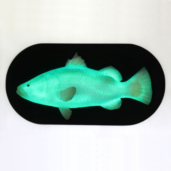 Wall Decor Fish with LED