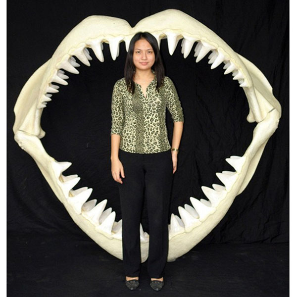 Great White Shark Jaws ( Large ) [ANI02456]
